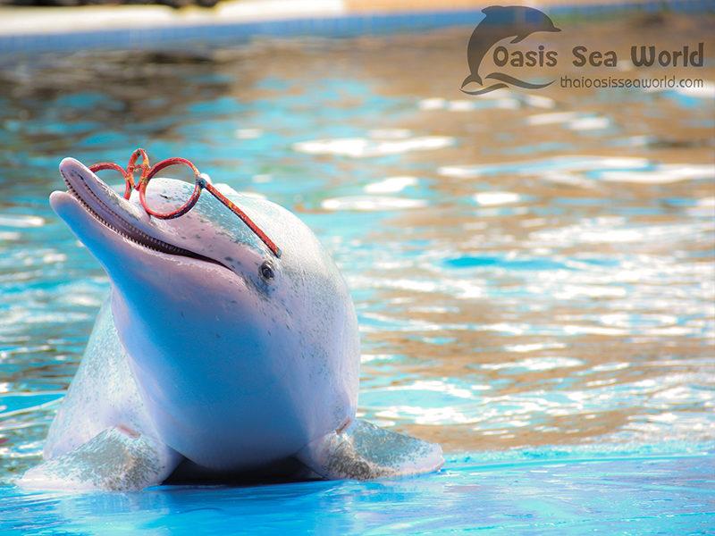 Chaolao Cabana Resort Oasis Sea World
