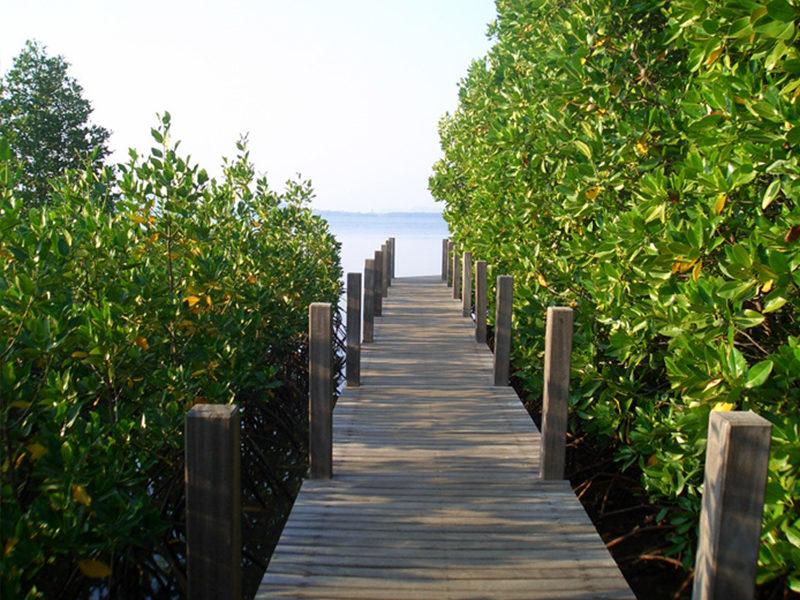 Chaolao Cabana Resort สะพานเดินศึกษาธรรมชาติป่าชายเลนอ่าวคุ้งกระเบน
